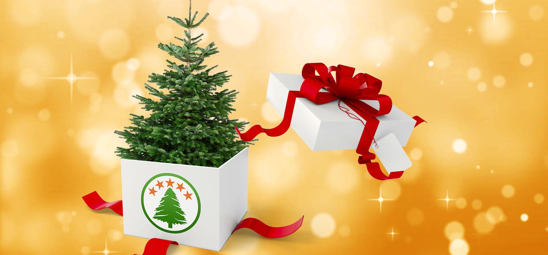Geef een kerstboom als relatiegeschenk van uw bedrijf